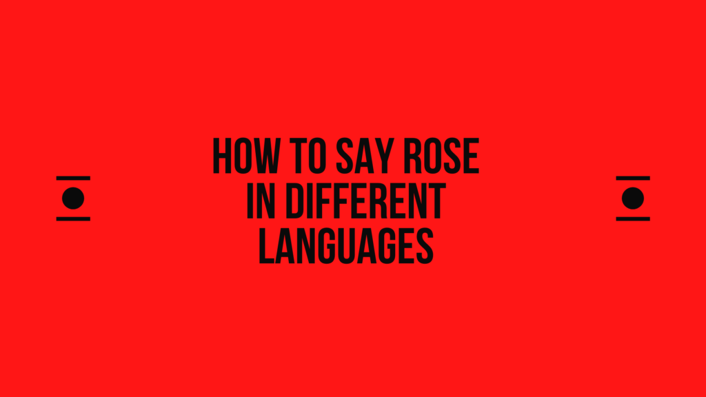 How to Say Rose in Other Languages In The World
