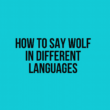 How to Say Wolf in Different Languages