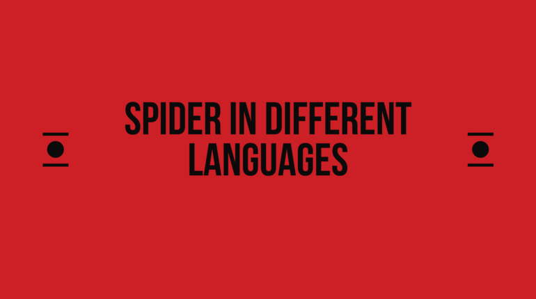 How to Say Spider in Other Languages In The World?