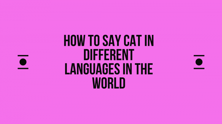 How to say cat in other languages in the world?