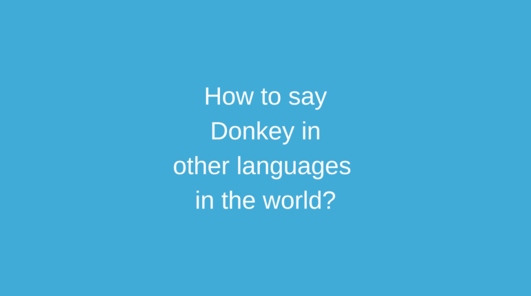 How to say Donkey in other languages in the world?