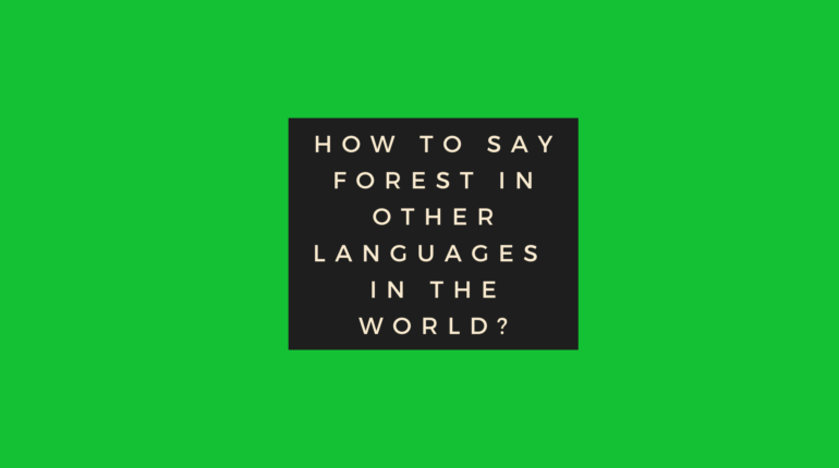 How to say forest in other languages ​​in the world?